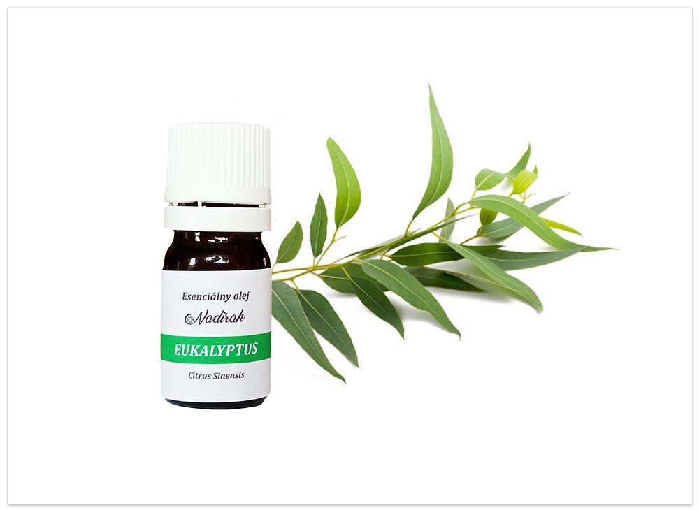 Esenciálny olej eukalyptus. nový